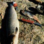 Lekkie łowienie w morzu