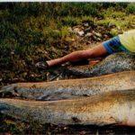 Rekordowe ryby